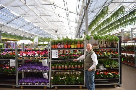 vireo plant sales