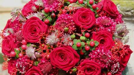 MARISA: Dutch Rosa