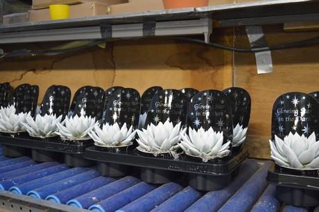 Bloemen en plantennieuws - Kwekerij verf ...