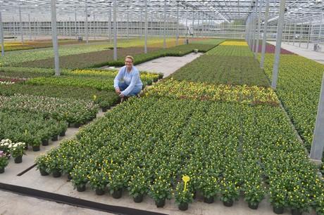 FloralDaily.com : Take a peek at seven Dutch nurseries