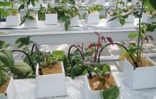 laag fosfaat potplanten