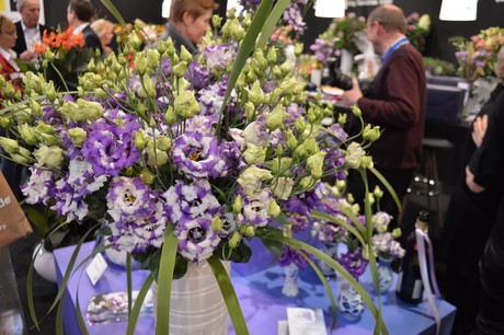 FloralDaily com : Takii Seed christens Lisianthus 'Corelli Delft