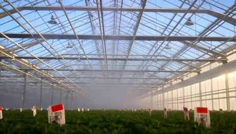 Gediflora installs mist system