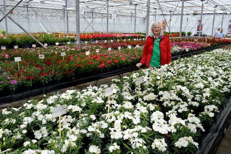 NL: New assortment pitched at Pre-FlowerTrials