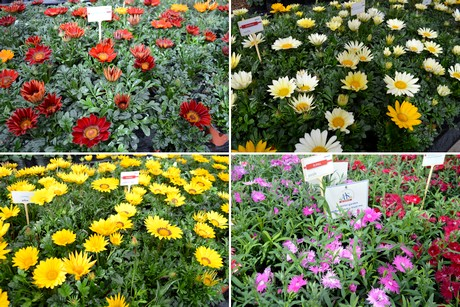 FloralDaily com : NL: New assortment pitched at Pre-FlowerTrials