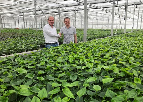 Floricultura expands with anthuriums