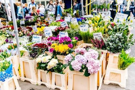 bloemen en planten nieuws